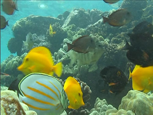 Aquarium video packs